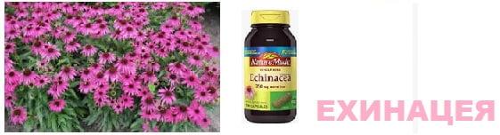 Цинабсин хомеопатия