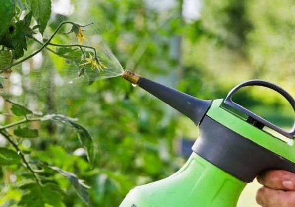 Суроватката ще помогне за укрепване на имунната система на растенията