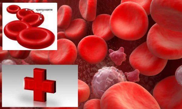еритроцити в урината и в кръвта