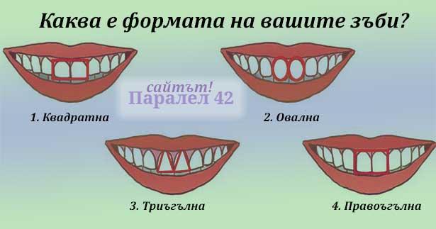 отношение на формата на зъбите и органите на тялото