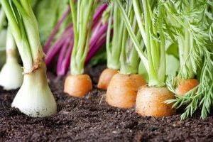 съвместимост на зеленчуците