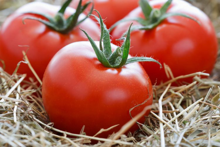 Правилно съхранение на домати