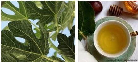 Чая от лист от смокиня, смокинов лист