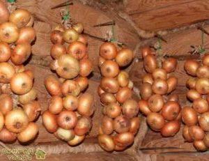 съхранение на домати и кромид лук