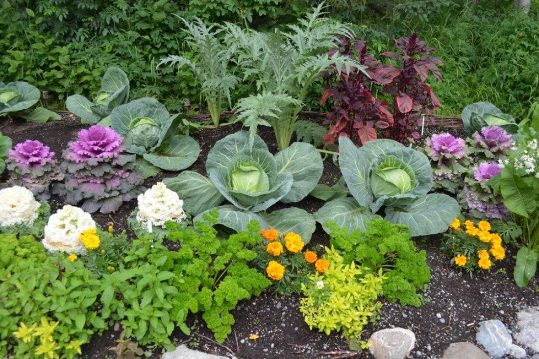 Ценната таблица за съвместимост на зеленчуците