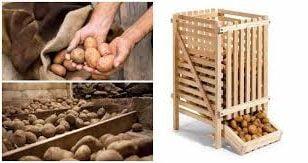 съхранение на домати и картофи