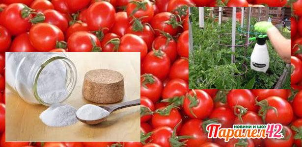 пръскане на домати с кисело мляко и сода бикарбонат