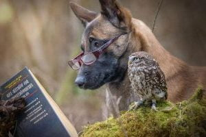 немска овчарка видове