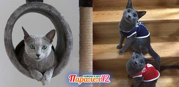 10 руска синя котка 01