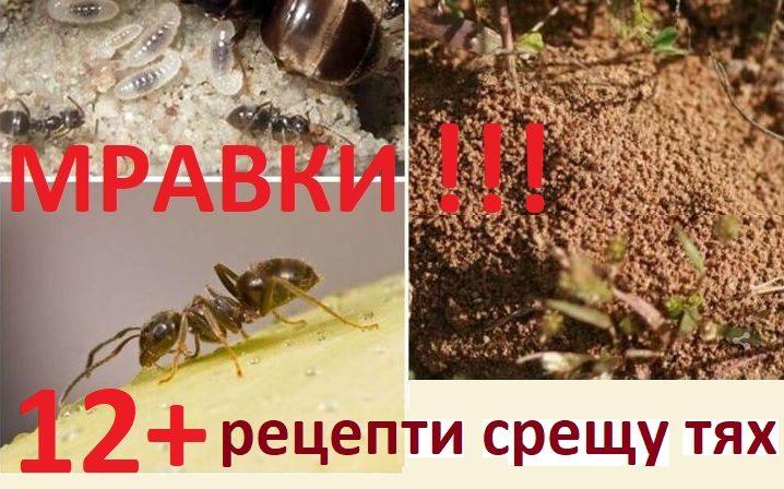 Борба с мравките в кухнята и др.
