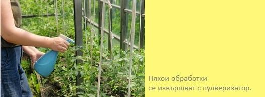 пръскане на домати със сода