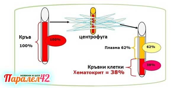 хематокрит, норма