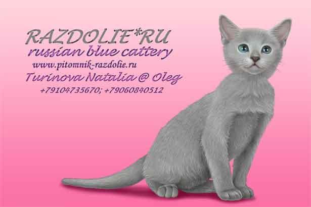 обяви за руска синя котка
