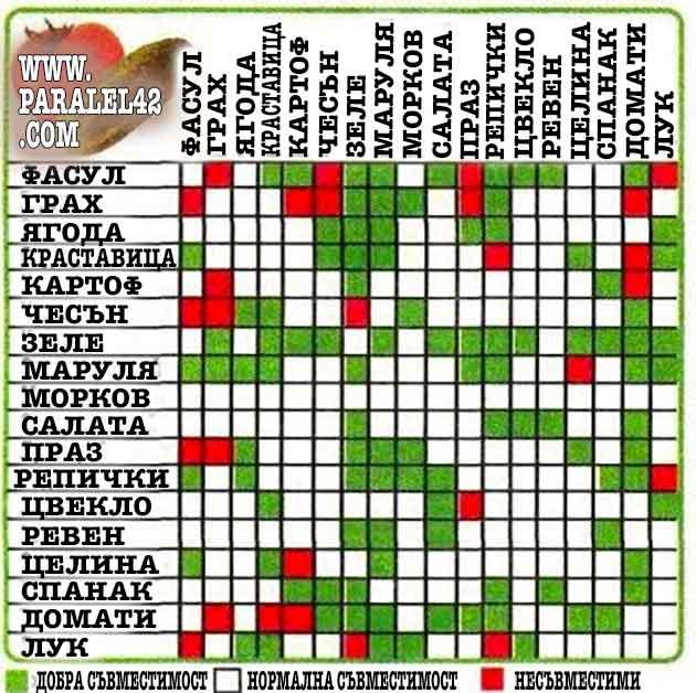 таблица за съвместимост на зеленчуците