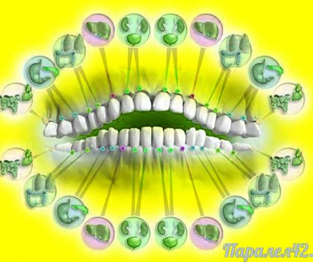 01 зъби и органи (схема)