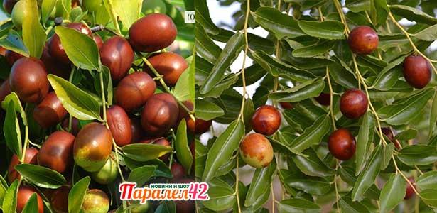 хинап плод, на капсули, се ползва за високо кръвно и в други рецепти има полза