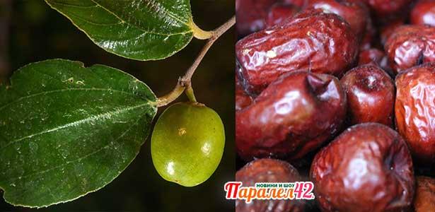 плодно дърво хинап, има добри рецепти и ползи