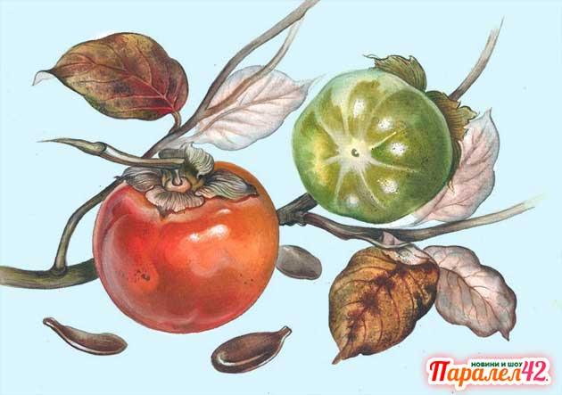 ползи, райска ябълка как се яде